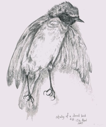 Dead bird drawing