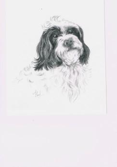 Robbie pencil portrait