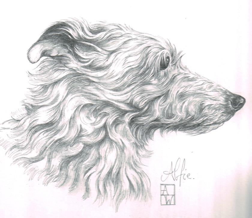 Sketch of Alfie dog