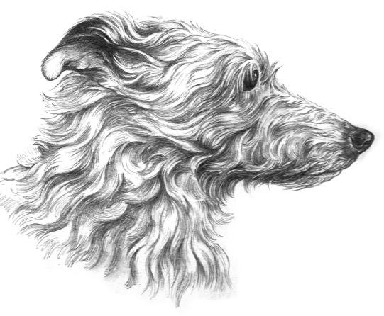 Mug artwork dog drawing